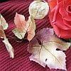 Leaf Veiners